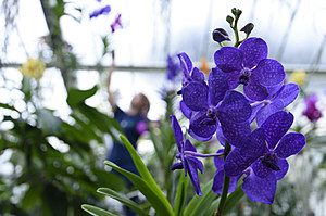 Launch Of The Kew Gardens Orchid Festival
